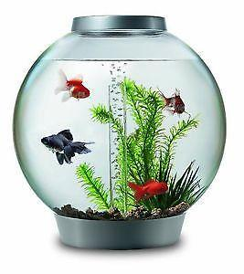 fish-tanks